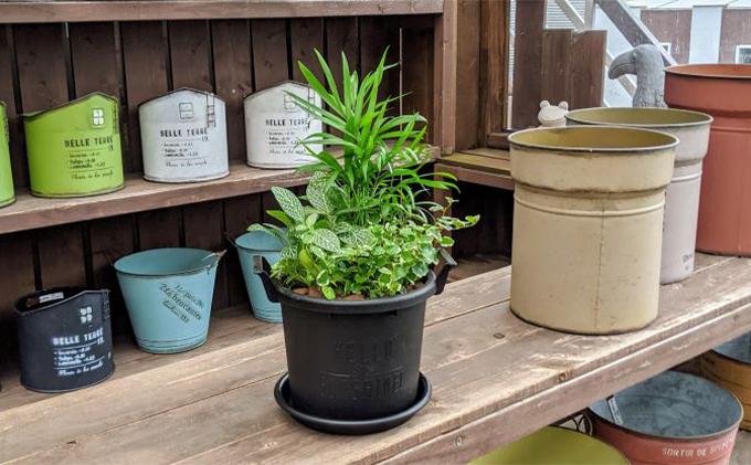 観葉植物3種類の寄せ植え 1鉢(受皿付き)