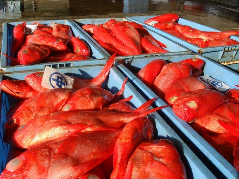 下田市魚市場