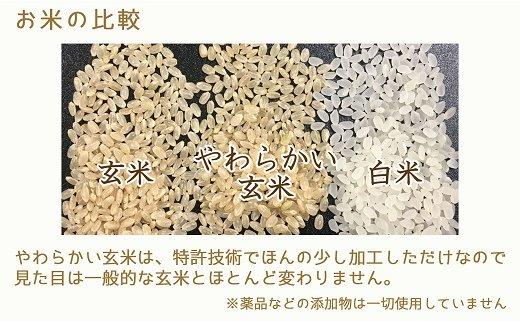 やわらかい玄米 900g ※12回定期便 安心安全なヤマトライス H074-221