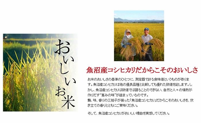 新潟魚沼産コシヒカリ 無洗米 5kg×240袋 安心安全なヤマトライス H074-145
