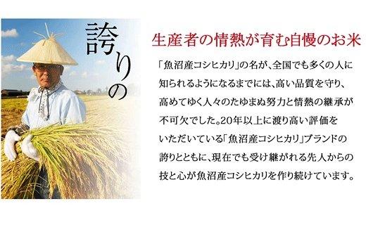 新潟県魚沼産コシヒカリ 10kg ※定期便6回 下旬発送 安心安全なヤマトライス H074-162