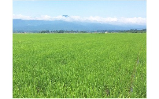 新潟県産コシヒカリ 10kg ※定期便6回 下旬発送 安心安全なヤマトライス H074-163