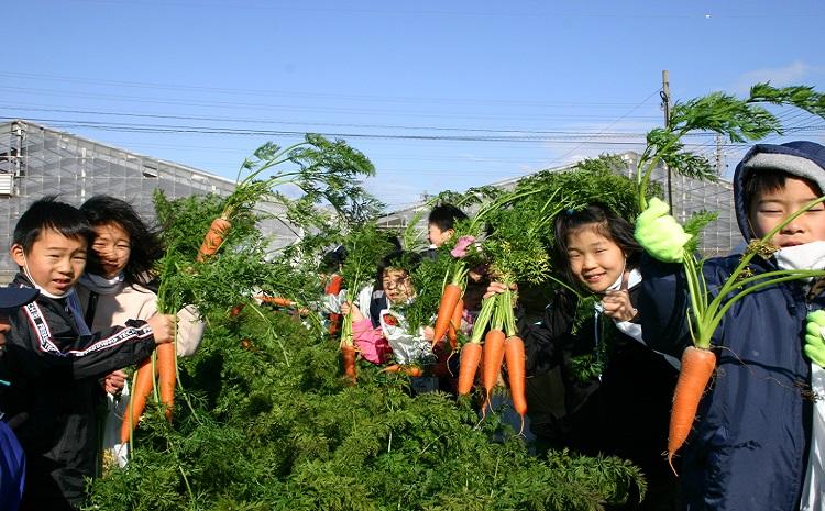 """今が旬!甘〜い人参""""へきなん美人""""と地元野菜セット H025-006"""