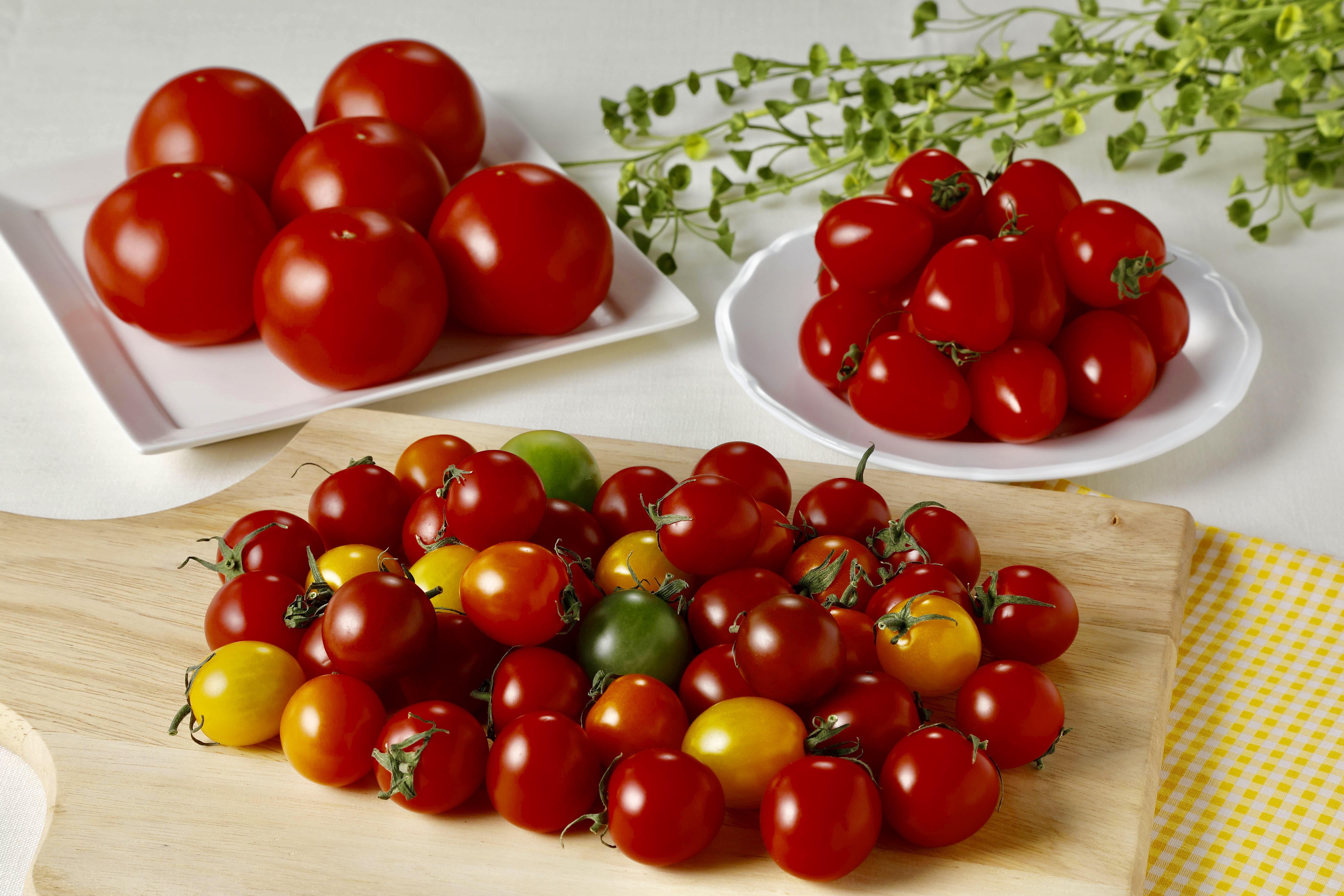 トマトの宝石箱をあなたにお届け!人気のトマト3種 1.5kg詰め合わせ H004-054