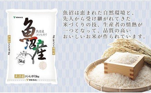 新潟県魚沼産コシヒカリ 5kg ※定期便6回 下旬発送 安心安全なヤマトライス H074-168