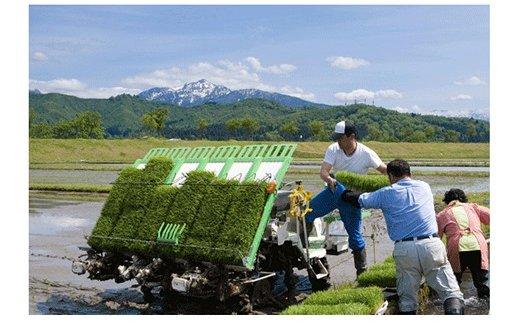 新潟県産新之助 2kg×2袋 ※定期便12回 安心安全なヤマトライス H074-084