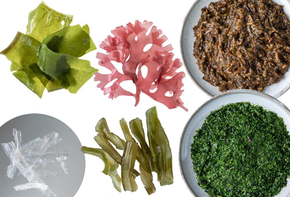6種の海藻入り「海藻プラス(18g×8袋)2箱セット」ノンフライ 健康志向 食物繊維 カルシウム H011-020