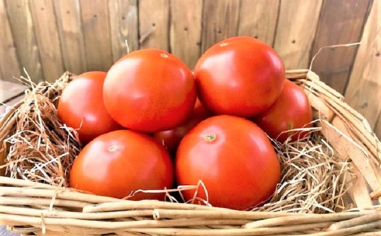 【先行受付 1月〜6月お届け】トマト好きにはコレ!!絶品プレミアムフルーツトマトH004-028