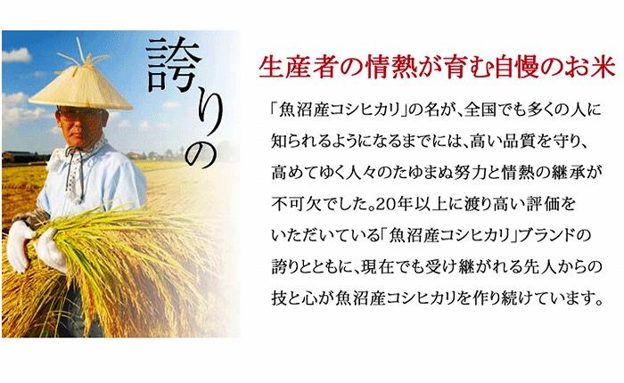 新潟魚沼産コシヒカリ 5kg×50袋 ※定期便12回 安心安全なヤマトライス H074-143