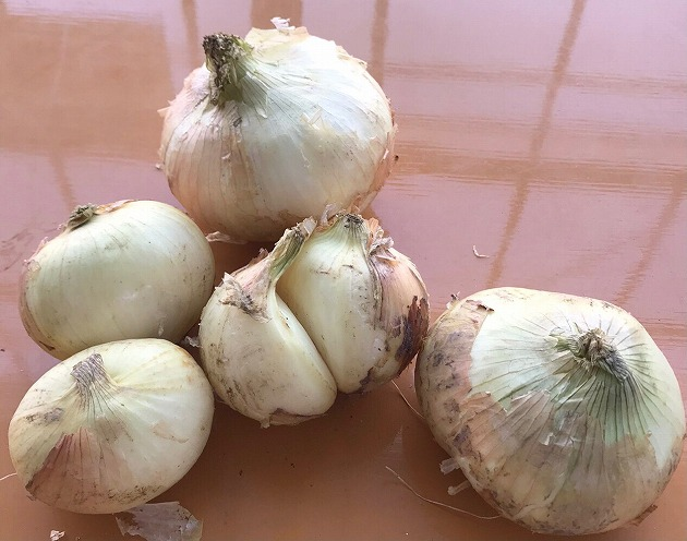 訳あり 新玉ねぎ 定期便 7kg×3回 生がおいしい 神重農産のブランド玉ねぎ「旬玉」 H105-028