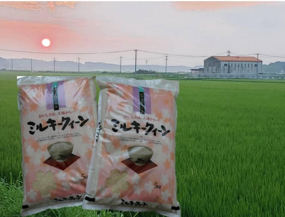 TC-0405 特別栽培米のミルキークイーン10㎏ (R3.5月発送分)