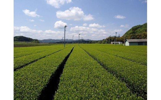 KH-03 日本三大産地のひとつ「伊勢茶」詰め合わせA