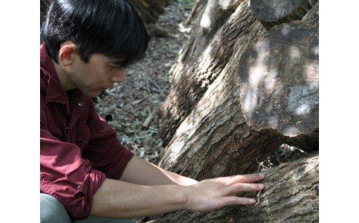 YZ-01 完全無農薬!森林栽培原木乾しいたけ「どんこ」