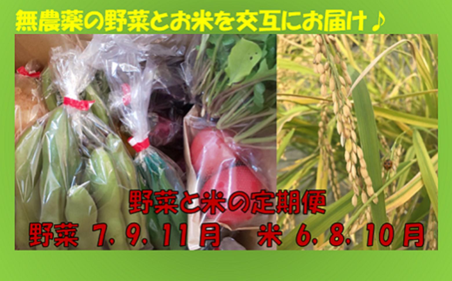 M-GA2.【全部で6回届く】野菜とお米(ひのひかり)の定期便
