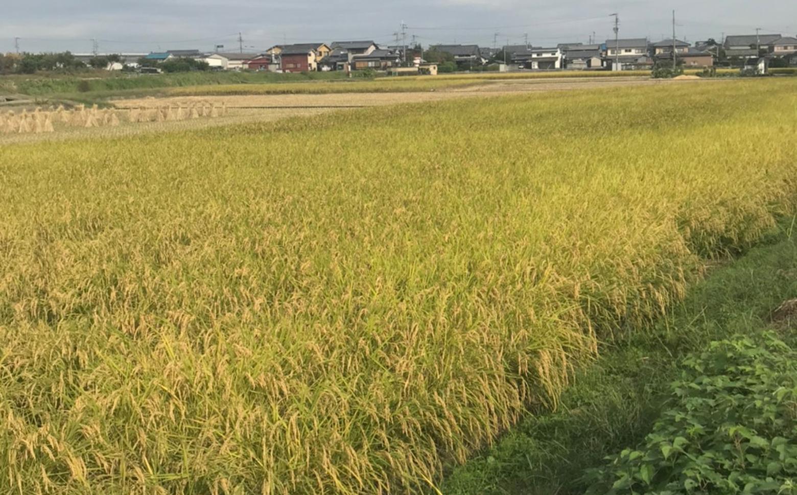 M-DF1.【米定期便(隔月)】吟農園のお米「ひのひかり」5㎏×6回