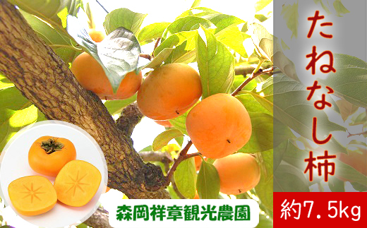 M-AB39.【予約受付】 桜井産 たねなし柿 約7.5kg