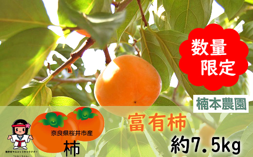 M-AD10.【限定30箱!】甘味たっぷり富有柿 約7.5kg