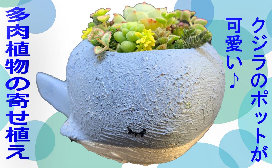 M-AF12.【種類はおまかせ】多肉植物の寄せ植え