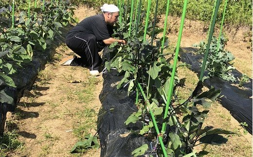 M-AB26.※配送地域限定【安心安全の農薬不使用】吟農園の野菜セット