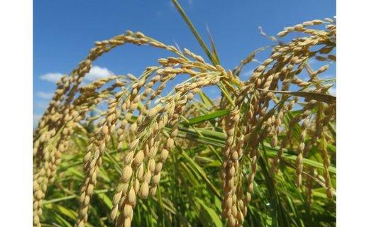 令和2年産和歌山県キヌヒカリ10kg 農家直送