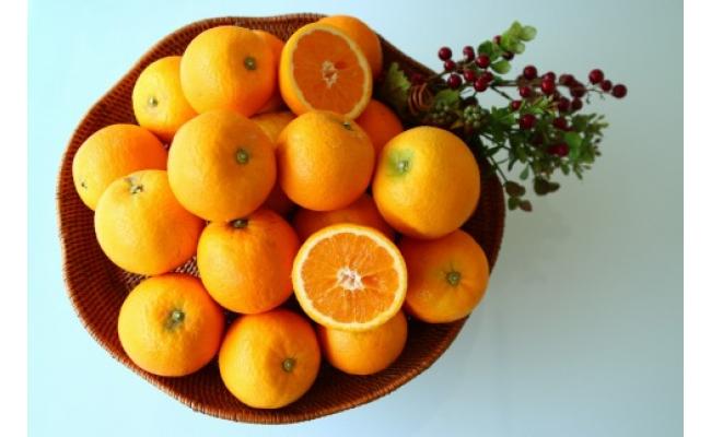 ZS6036_主井農園 国産 バレンシアオレンジ青秀約3㎏