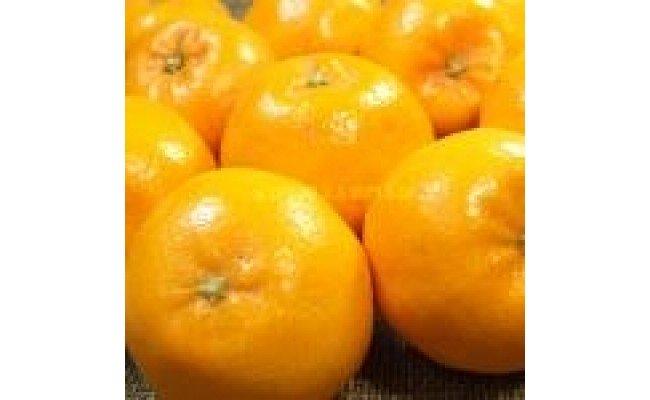 V6066_和歌山県有田産春みかん はるみ 約4kg
