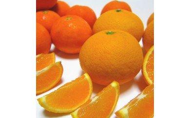 AB6064_有田育ちの濃厚柑橘詰め合わせセット 約5kg