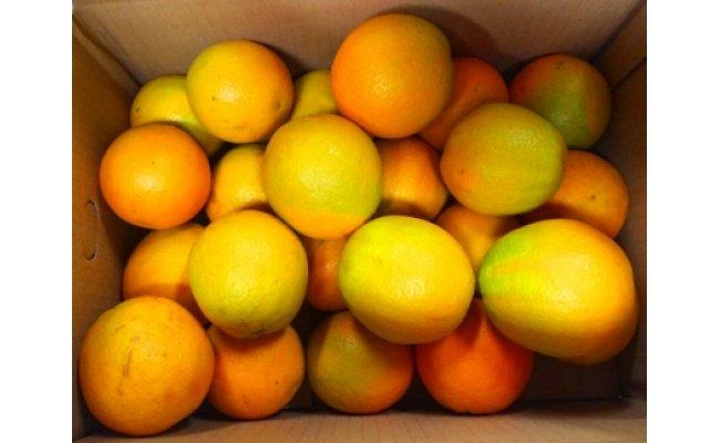 G6040_秀品希少な国産バレンシアオレンジ 5㎏