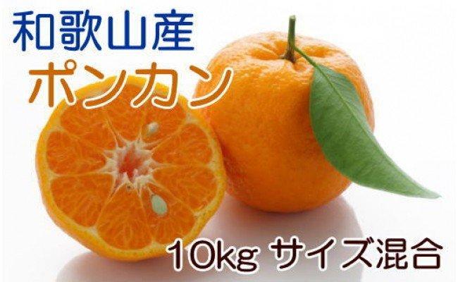 ZD6160_[厳選・春みかん]有田産ポンカン 約10kg(サイズ混合)