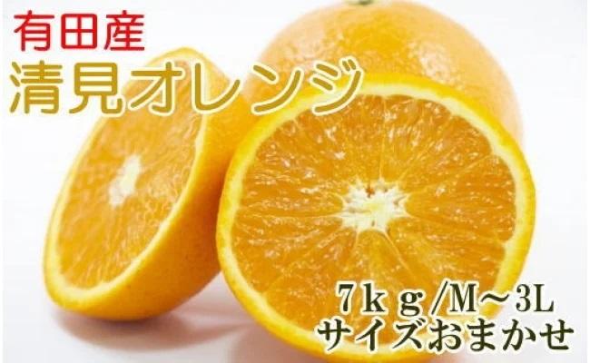 ZD6210_[厳選]有田産清見オレンジ 約7kg(サイズおまかせ・秀品)