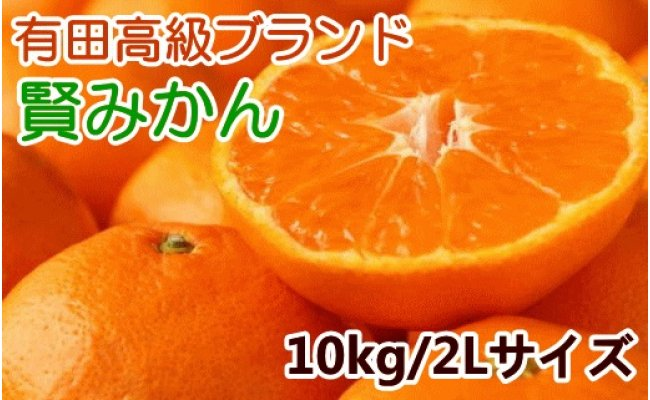 ZD6169_有田ブランド 賢みかん10kg(2Lサイズ・赤秀)【数量限定】