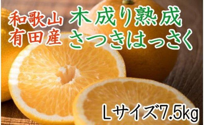 ZD6111_こだわりの和歌山有田産木成り熟成さつき八朔 7.5kg(Lサイズ)