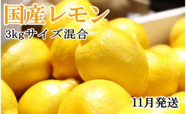 ZD6183_【手選別・産直】紀の川産の安心国産レモン約3kg *11月発送*
