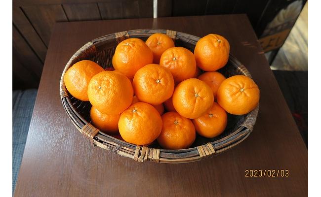AV6021_がんこ果物屋の厳選【秀 ぽんかん】約7~7.5㎏ 3L~L