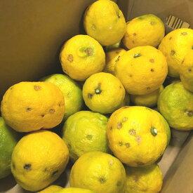 AB6014_【国産】紀州和歌山の柚子 3kg (ご家庭用)