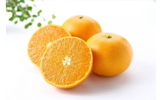 AN6016_セミノールオレンジ青秀5㎏