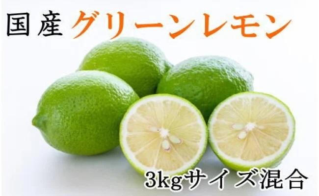 ZD6217_【産直】和歌山産グリーンレモン 約3kg(サイズ混合)