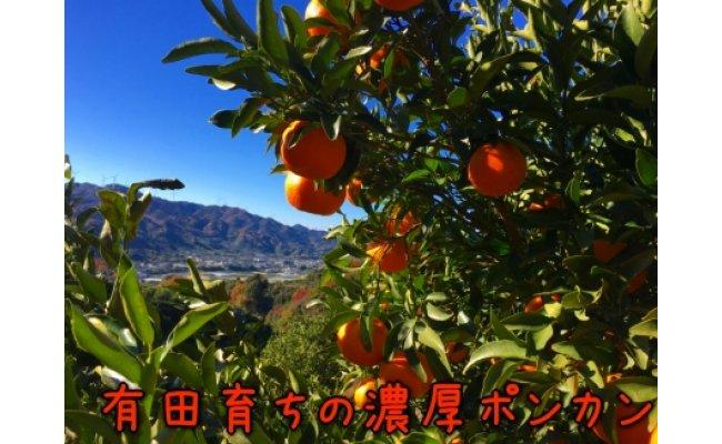 AB6312_【極甘柑橘】有田育ちの濃厚ポンカン(ご家庭用)  約5kg
