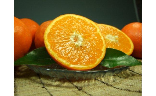 V6078_田村産セミノールオレンジ 約5kg(サイズおまかせ)
