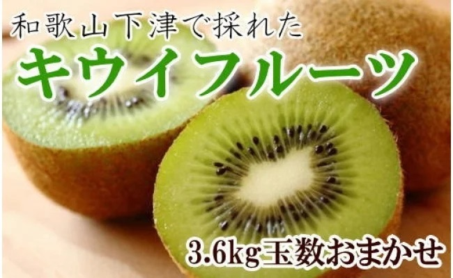 ZD6204_和歌山の下津で採れたキウイフルーツ 約3.6kg(玉数おまかせ・秀品)