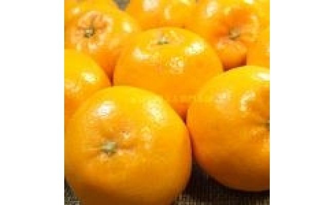 V6025_和歌山県有田産春みかん はるみ 約2.8kg