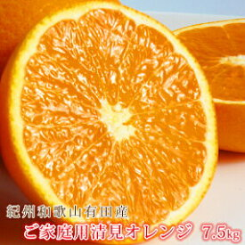 G6092_【ご家庭用】紀州有田産清見オレンジ 7.5kg