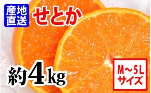 ZA6209_【産地直送】せとか 約4 kg (M~5L)