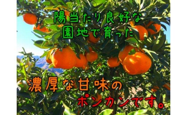 AB6011_【極甘柑橘】有田育ちの濃厚ポンカン(ご家庭用)約10kg