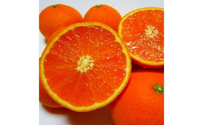 AB6314_有田育ちの濃厚清見オレンジ 7.5kg