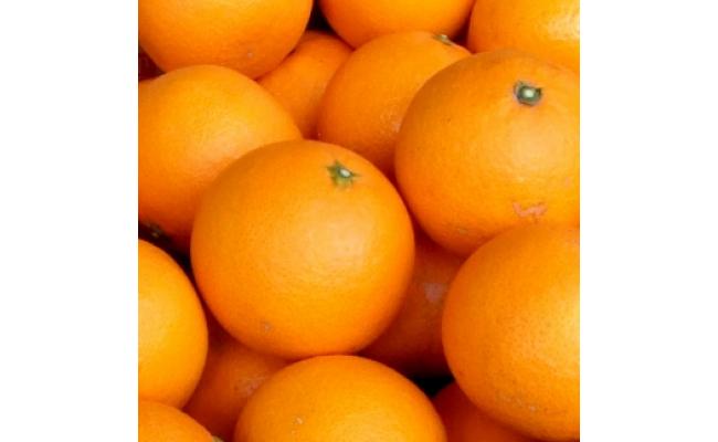 V6070_清見オレンジ[約8kg]和歌山県有田産春みかん(果実サイズおまかせ) 春みかん紀伊国屋文左衛門本舗  ※日時指定不可