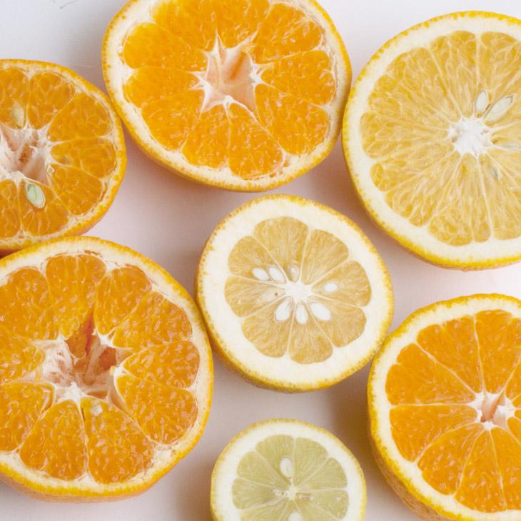 <4月発送>家庭用 旬の柑橘詰合せ6kg+180g(傷み補償分)【詰め合せ・詰め合わせ】【わけあり・訳あり】 ※2022年4月上旬~4月下旬頃に順次発送予定 ※北海道、沖縄配送不可