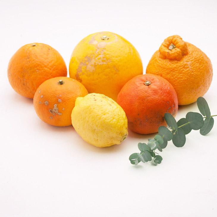 <3月より発送>家庭用 旬の柑橘詰合せ6kg+180g(傷み補償分)【詰め合せ・詰め合わせ】【わけあり・訳あり】 ※2022年3月上旬~4月下旬頃に順次発送予定 ※北海道、沖縄配送不可
