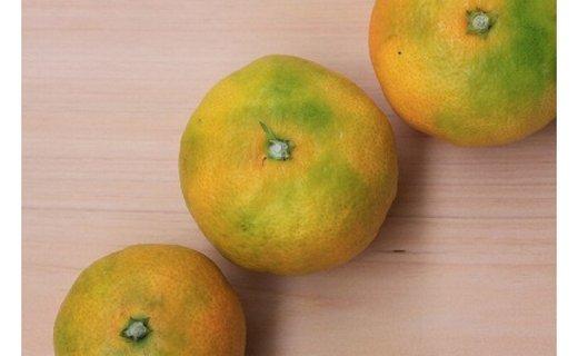 甘い青切りみかん 10kg MS玉 マルチ被覆栽培