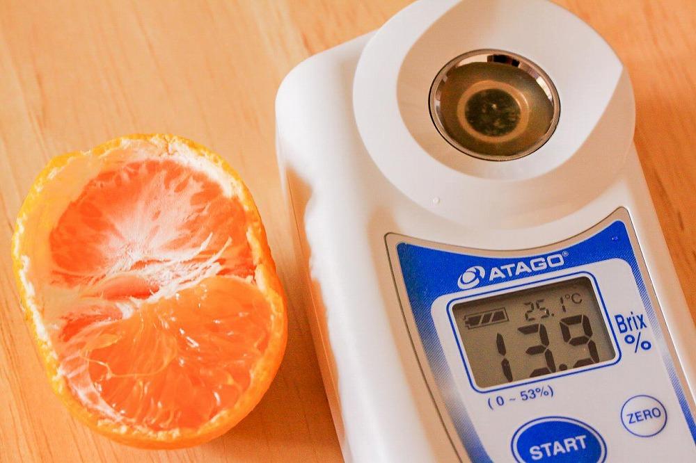 甘い青切りみかん 5kg MS玉 マルチ被覆栽培